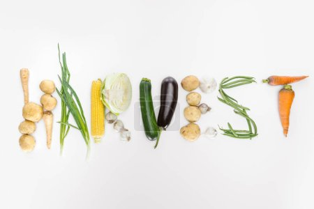 top view of autumn vegetables arranged in harvest lettering isolated on white
