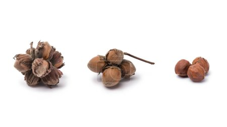 hazelnuts with and without nutshells isolated on white background
