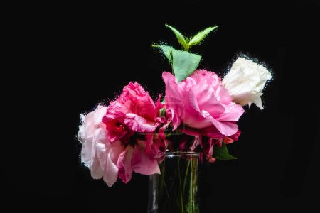 close-up view of beautiful wet pink and white eustoma flowers in transparent vase on black