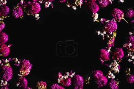 top view of beautiful pink clover flowers isolated on black background