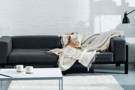 Photo pour Cute chat gingembre couché sur le canapé dans le salon - image libre de droit