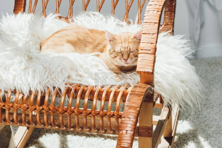 cute domestic ginger cat sleeping on rocking chair in living room