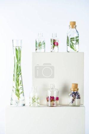 Photo for Vase and bottles of natural herbal essential oils with flowers and herbs on white cubes - Royalty Free Image