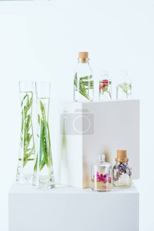 Photo for Bottles and vases of natural herbal essential oils with herbs and flowers on white cubes - Royalty Free Image