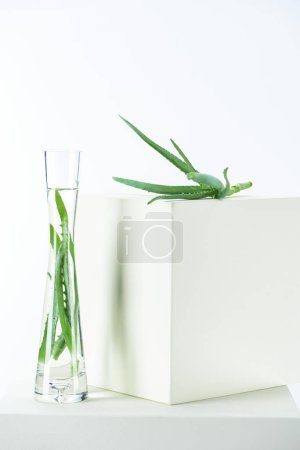 vase of natural herbal essential oils with aloe vera on white cubes