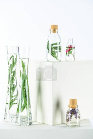 Photo for Bottles and vases of natural herbal essential oils with aloe vera and flowers on white cubes - Royalty Free Image