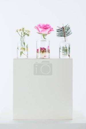 Photo pour Trois bouteilles d'huiles essentielles à base de plantes avec des fleurs de camomille, de roses et de sapin brindille sur cube blanc - image libre de droit