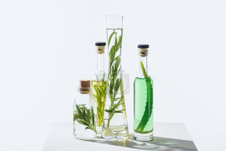 glass bottles of natural herbal essential oils with twigs on white surface