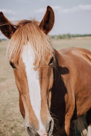 portrait of beautiful brown horse grazing on meadow in countryside