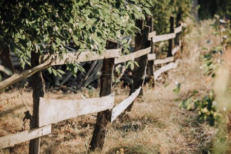 selective focus of green leaves and wooden fence on meadow in countryside