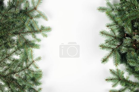top view of beautiful evergreen fir twigs on white background