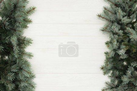 Photo pour Vue de dessus de belles brindilles de sapin à feuilles persistantes sur fond de bois blanc - image libre de droit