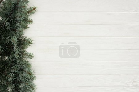top view of beautiful evergreen coniferous branches on white wooden background