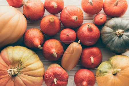 top view of different ripe autumnal pumpkins on wooden table