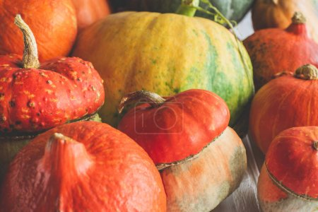 Photo for Close up of pile of ripe autumnal pumpkins on tabletop - Royalty Free Image