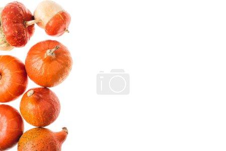 Photo pour Vue d'automnales citrouilles orange mûres isolé sur blanc - image libre de droit