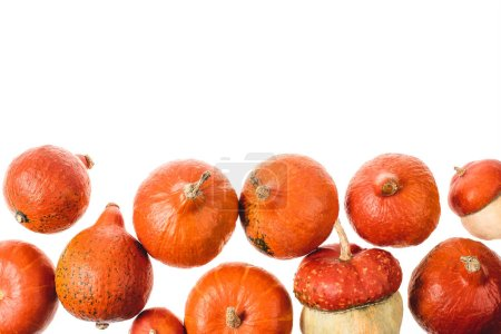 autumnal ripe orange pumpkins isolated on white