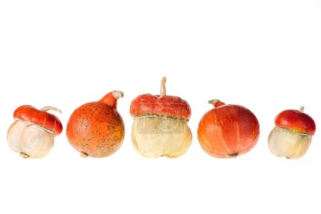 five different autumnal pumpkins isolated on white