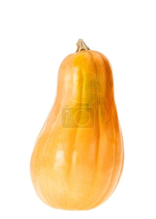 close up of one yellow autumnal pumpkin isolated on white