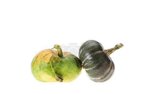 green and dark green autumnal pumpkins isolated on white