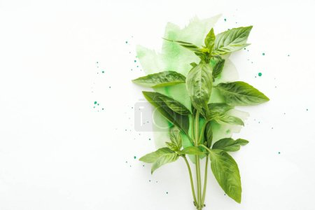 Photo for Top view of bunch of fresh basil brunches on white surface with green watercolor strokes - Royalty Free Image