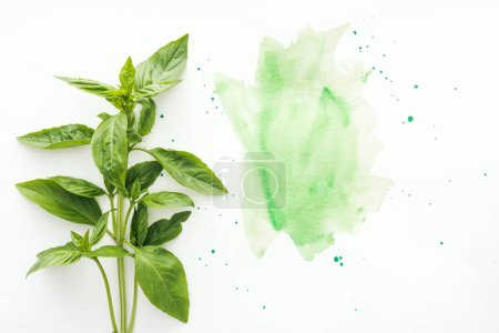 Photo for Top view of bunch of basil brunches on white surface with green watercolor strokes - Royalty Free Image