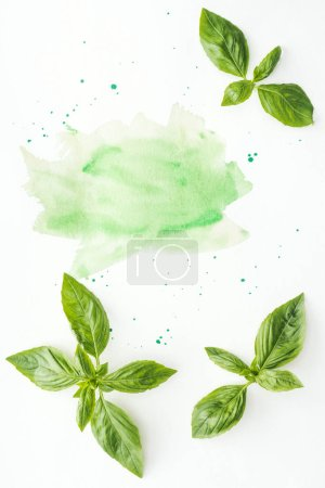 Photo for Top view of uncooked basil leaves on white surface with green watercolor strokes and blots - Royalty Free Image