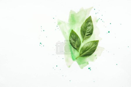 Photo for Top view of basil leaves on white surface with green watercolor strokes - Royalty Free Image