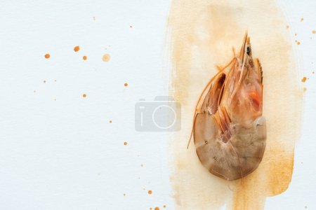 top view of single uncooked shrimp on white surface with watercolor strokes