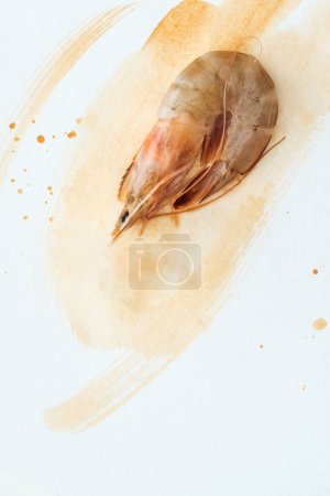 top view of uncooked prawn on white surface with watercolor strokes