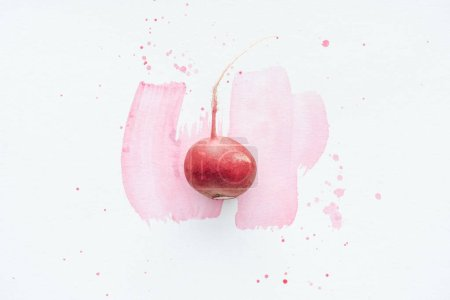 top view of single ripe radish on white surface with pink watercolor strokes