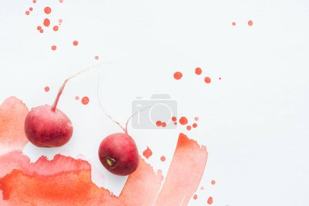 top view of ripe radishes on white surface with red watercolor strokes