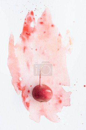 top view of ripe radish on white surface with red watercolor strokes