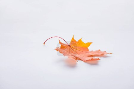 Photo for One autumnal orange maple leaf isolated on white - Royalty Free Image