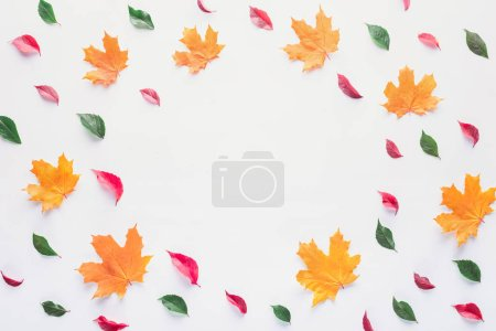 flat lay of colored leaves with empty circle inside isolated on white, autumn background