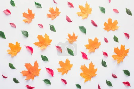 set of different leaves isolated on white, autumn background