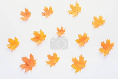 Foto de Conjunto de hojas de arce otoñal naranja aislada sobre blanco - Imagen libre de derechos