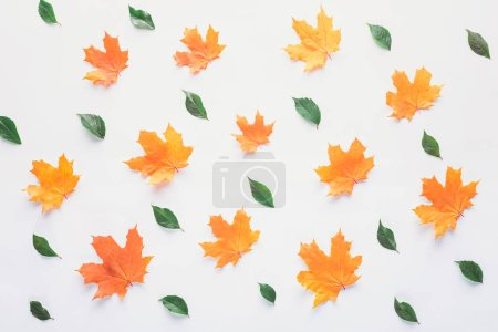 collection of orange and green leaves isolated on white