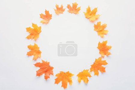 flat lay of orange maple leaves in circle isolated on white