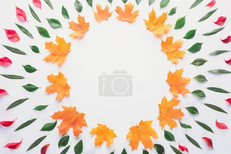 flat lay of circles of leaves isolated on white, autumn background