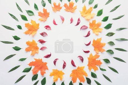 Foto de Endecha plana de círculos de hojas otoñales, aislados en blanco - Imagen libre de derechos