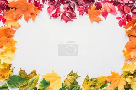 Photo for Top view of colored frame of maple leaves isolated on white, autumn background - Royalty Free Image