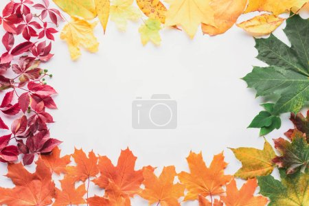 top view of frame of autumnal leaves isolated on white