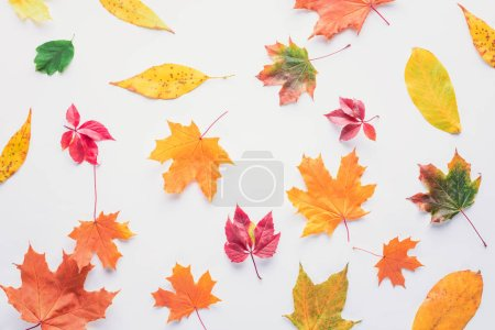 top view of scattered autumnal leaves isolated on white