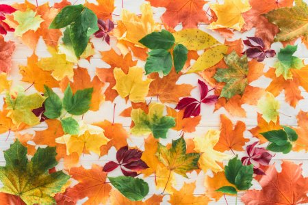 top view of fallen autumnal maple leaves on wooden surface