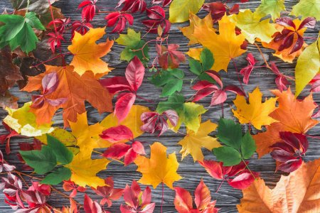 top view of scattered colored autumnal maple leaves on wooden surface