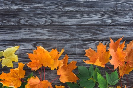 top view of orange and green autumnal maple leaves on wooden surface