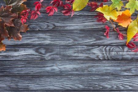 vue de dessus de feuilles automnales colorées sur surface gris en bois