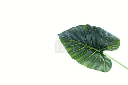 Photo for Elevated view of beautiful green palm leaf isolated on white, minimalistic concept - Royalty Free Image