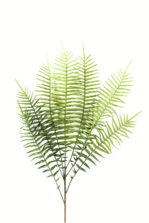 view from above of beautiful green fern branches isolated on white, minimalistic concept